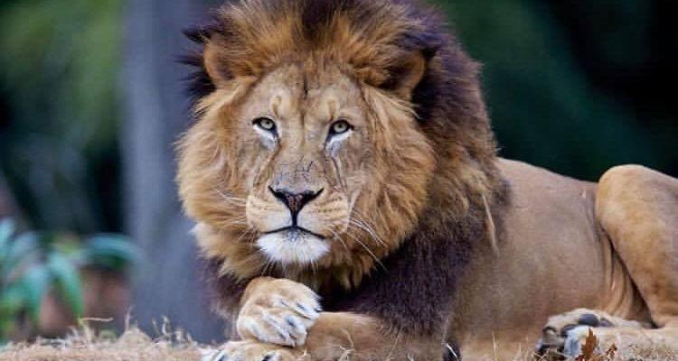 Leão – O Criador!